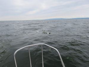 海洋散骨へ行ってきました!